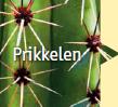 Cactus prikkelen