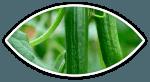 Komkommercluster