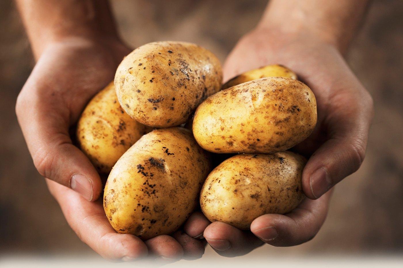 Succesvol aardappelen verkopen heeft de ondernemer zélf in de hand