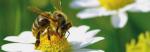 Geen extra risico's gecombineerde blootstelling aan gewasbeschermingsmiddelen